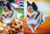 do hand painting of your pet on canvas
