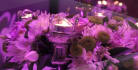 do elegant video for your wedding