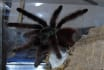 send you a photo of my pet tarantula