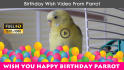 happy Birthday Wish From The Parrot