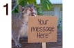 put a message on a sign held by SQUIRREL