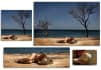 crop image, resize  photos, 25 images to the size you want