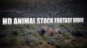 give you ten HD animal stock footage video