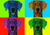 turn your photo or your pet photo into 4 or 9 Andy Warhol pop art