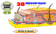 give 30 human organs illustrations and drawings for medical