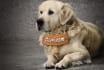 beautiful dog model advertisement message