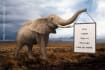 give you an image with an elephant holding your sign