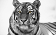 make Your Photo Black And White With One Color