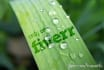 put your message or logo on a plant leaf