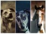 turn your pets photo into a Beautiful  Portrait