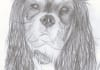 draw a photo realistic portrait of your pet