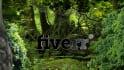 make this Live jungle logo reveal animation