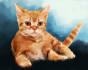 paint a Pet Portrait in watercolor style