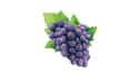 create realistic fruits digital illustrations for packaging