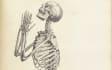 pencil sketchmedical illustrations